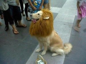 disfraz-de-leon-perros